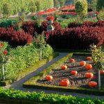 Как превратить огород в цветущую клумбу