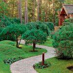 Какие должны быть деревья на дачном участке