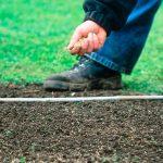Газонные травы: как сеять и ухаживать
