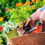 Ландшафтные и садовые работы в июне