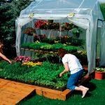 Что лучше выращивать на огороде на продажу
