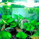 Какой аквариум нужен для содержания петушка