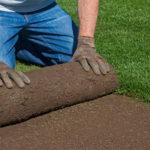 Как выращивают рулонный газон