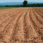 Особливості різних типів ґрунтів та вибір відповідних культур